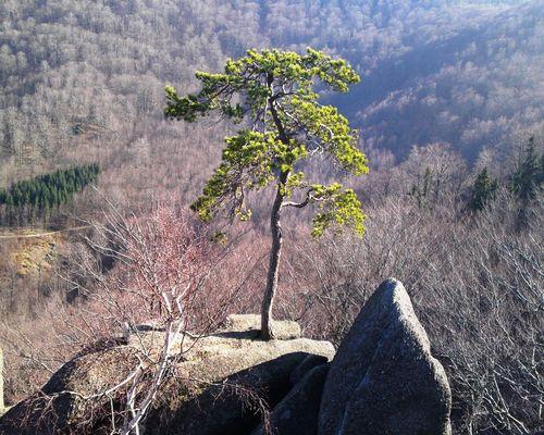 Srázy nad Viničnou plotnou 10.3. 2014
