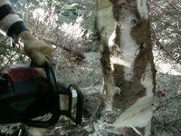 dřevorubec - video
