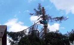 Ořez stromů