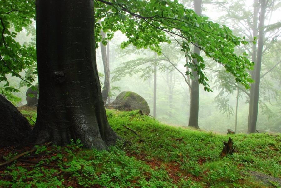 Kouzlo deštivých lesú a podivných setkání