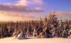 Jizerky 26.1. 2012
